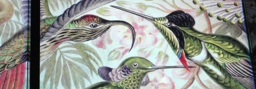 kolibris1.jpg