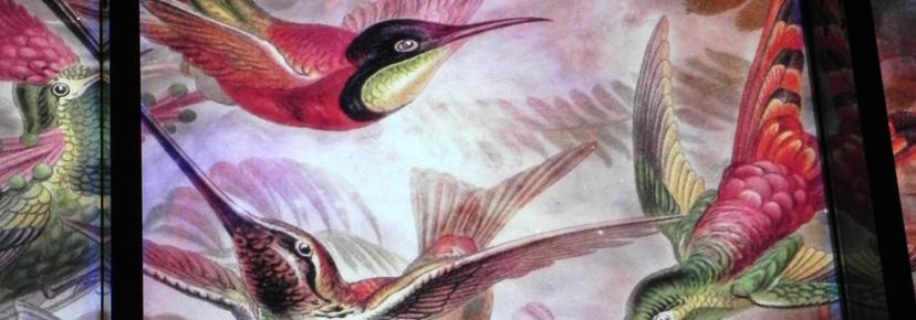 kolibris2.jpg